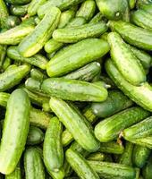 Pickling cucumbers or pickles on display photo