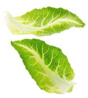cabbage leaves isolated on the white background