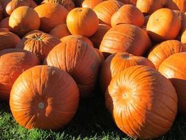 Pumpkins, Pumpkins everywhere photo