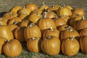 Large Group of Pumpkins Bunched Together
