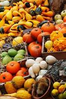 Pumpkins, summer and winter squashes
