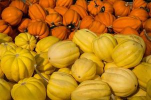 Yellow and orange acorn squash
