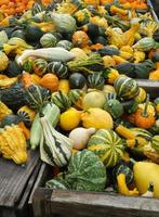 Gourds, squashes, and Pumpkins photo