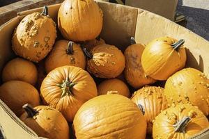 Pumpkins for sale at Farmer's Market