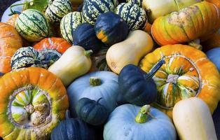 Pumpkins Gourds and Squash