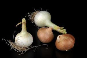 onions photo