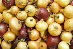 onion backround