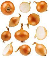 Set onions photo