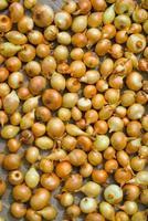 Drying Onion photo