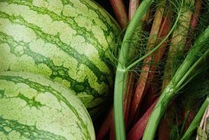 watermelon, fennel, rhubarb