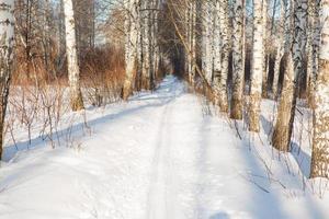 ski run photo