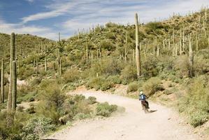 desert rider photo