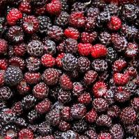 Large Collection on Fresh Black Cap Raspberries photo