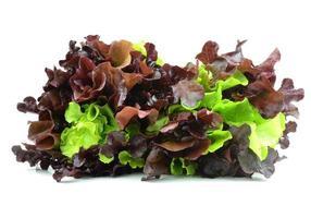 Fresh red lettuce on white photo