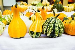 Colorful pumpkins photo