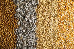 Agricultural grains