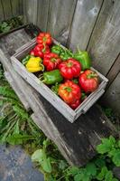 Peppers in a wooden box