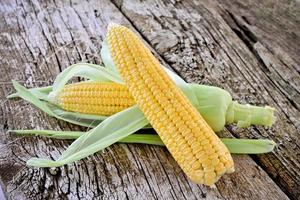 Sweet corn closeup