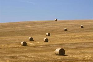 cosecha en campo foto