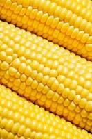Ripe yellow corn, top view, food background