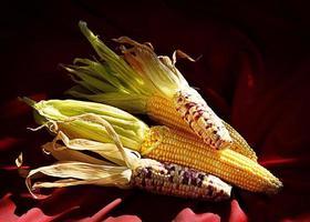 Sweet corn stil llife shot photo