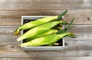 caja de madera vintage llena de maíz dulce fresco en tallos