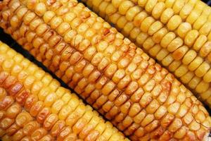 Grill corn ears photo