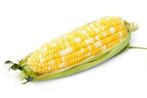 An ear of corn isolated on a white background