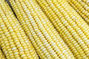 mazorcas de maíz amarillo fresco de cerca