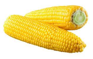 maíz aislado en un fondo blanco. con trazado de recorte