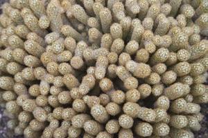 bola de cactus foto