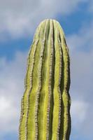 desert cactus in baja california photo