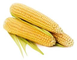 An ear of corn isolated on the white background