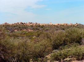 paisaje desértico foto