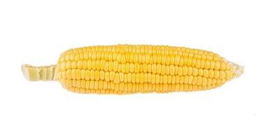Sweet corn over white background photo