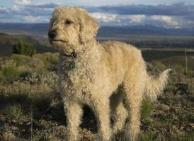 Teig on Colorado Plateau photo