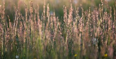 long grass photo