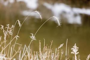 Michigan Grass photo