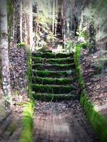 Moss Covered Ruin Stairs In The Forest