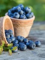 Blueberries in garden photo