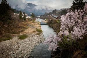 The river and Sakura photo
