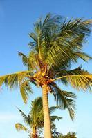 Palm tree in Ang Thong National Marine Park, Thailand photo