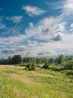 Summer landscape. photo