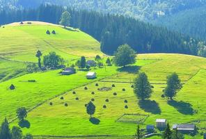 Summer countryside photo