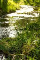 pequeño arroyo de primavera