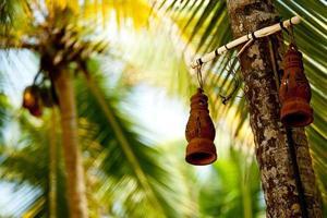 lámpara de arcilla y palmera foto