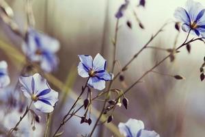 flores, primavera foto