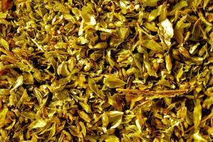 closeup of rosemary herb in sunlight photo