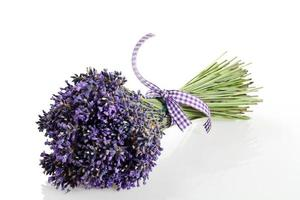 bouquet of lavender flowers cut on white background photo