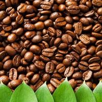 Natural coffee beans background with green leaves photo